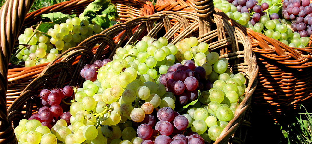 images/itineraries/foodwine/Northern-tastes-basket-of-grapes-italy-tours-600px.jpg
