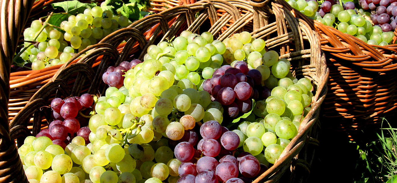 images/itineraries/foodwine/Northern-tastes-basket-of-grapes-italy-tours.jpg